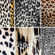 Royalty-Free Stock Photo: Animal pattern collage