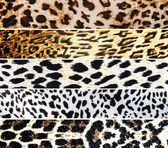 Set of Leopard textures — Stock Photo