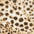 Leopard texture background — 图库照片