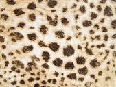 Leopard texture background — Stock Photo