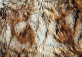 Fur texture of fox — Stock Photo