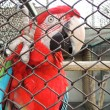 Beautiful Ara parrot in zoo — Stock Photo