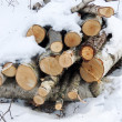 Wood pile with snow in forest — Stock Photo