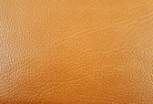 Animal skin texture — Stock Photo