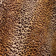 Stock Photo: Leopard background