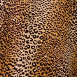 Leopard background — Stock Photo #27988121