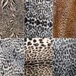 Stock Photo: Wild Animal pattern collage