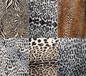 Wild Animal pattern collage — Stock Photo