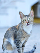 Cat with suprised look — Stock Photo