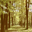 Forest vintage — Stock Photo #33433557