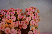 Vintage lovely old flowers pattern — Stock Photo