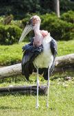 Shy bird — Stock Photo