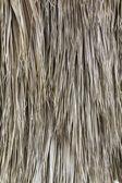 Las hojas de palma seca — Foto de Stock