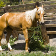 Stock Photo: Brown horse with white mane