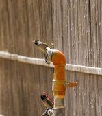 Jay jay on the fire hydrants — Stock Photo