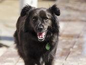 Portrait of a dog — Stock Photo