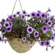 Flowers in a pot — Stockfoto