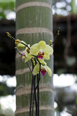 Colored Orchid — Stock Photo