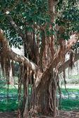 Exotic tree — Stock Photo