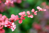Pink branch — Stock Photo