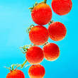 Tomatoes under water — Stock Photo