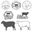 Set of premium lamb labels, badges and design elements — Stockvectorbeeld