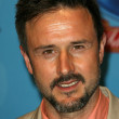 David Arquette — Stock Photo #14987661