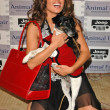 The Jeep Yappy Hour And Febreze Pet Fashion Show — Stok fotoğraf