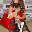The Jeep Yappy Hour And Febreze Pet Fashion Show — Stockfoto