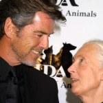 ������, ������: Pierce Brosnan and Jane Goodall