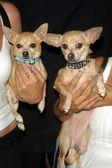 Gidget e moondoggie — Fotografia Stock