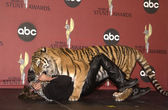 Randy Miller and Tara the Tiger — Stockfoto