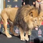 Постер, плакат: Leo the Lion