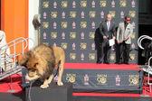 Sylvester Stallone, Gary Barber, Leo the Lion — Stock Photo