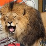 ������, ������: Leo the Lion