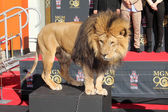 Leo the Lion — Stock Photo