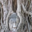 The head of the sandstone buddha. — Foto Stock