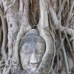 The head of the sandstone buddha. — Stock Photo