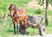 Rural horse. — Stock Photo