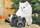 White cat sitting on a chair next to the camera. — Stock Photo