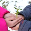 Hands of boy and girl keep green sprig. — Stock Photo
