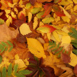Royalty-Free Stock Photo: Colorful autumn background