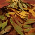 Colorful autumn background — Stock Photo #14963171
