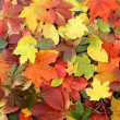 Colorful autumn background — Stock Photo #14963321