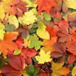 Colorful autumn background — Stock Photo #14963363
