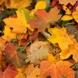 Colorful autumn background — Stock Photo #14963805