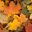 Colorful autumn background — Stock Photo #14963813
