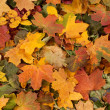 colorful autumn background — Stock Photo #14963847
