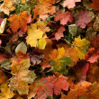 Colorful background of fallen autumn leaves — Stock Photo #14963887