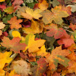 Colorful background of fallen autumn leaves — 图库照片